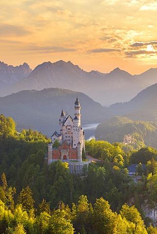 Schloss Neuschwanstein castle, Allgäu, Schwangau, Ostallgäu, Allgäu, Schwabia, Bavaria, Germany, Europe - 832-378249