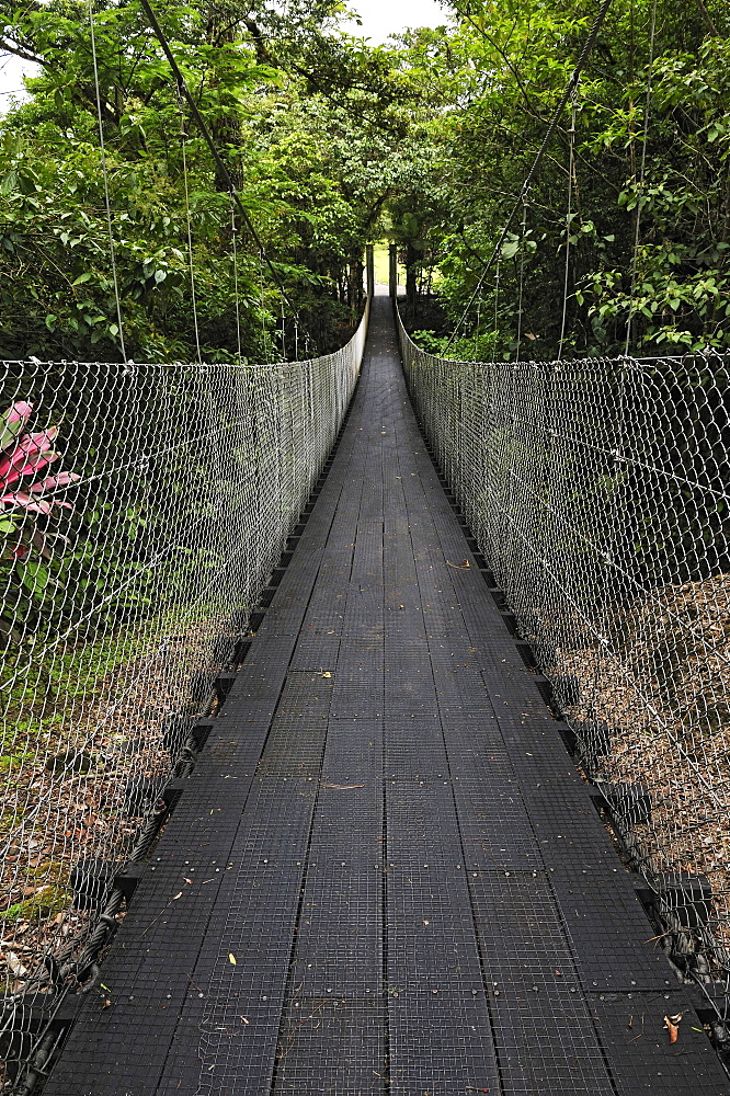 Suspension bridge, Danta Bridge, near the Arenal Observatory Lodge, Alajuela Province, Costa Rica, Central America