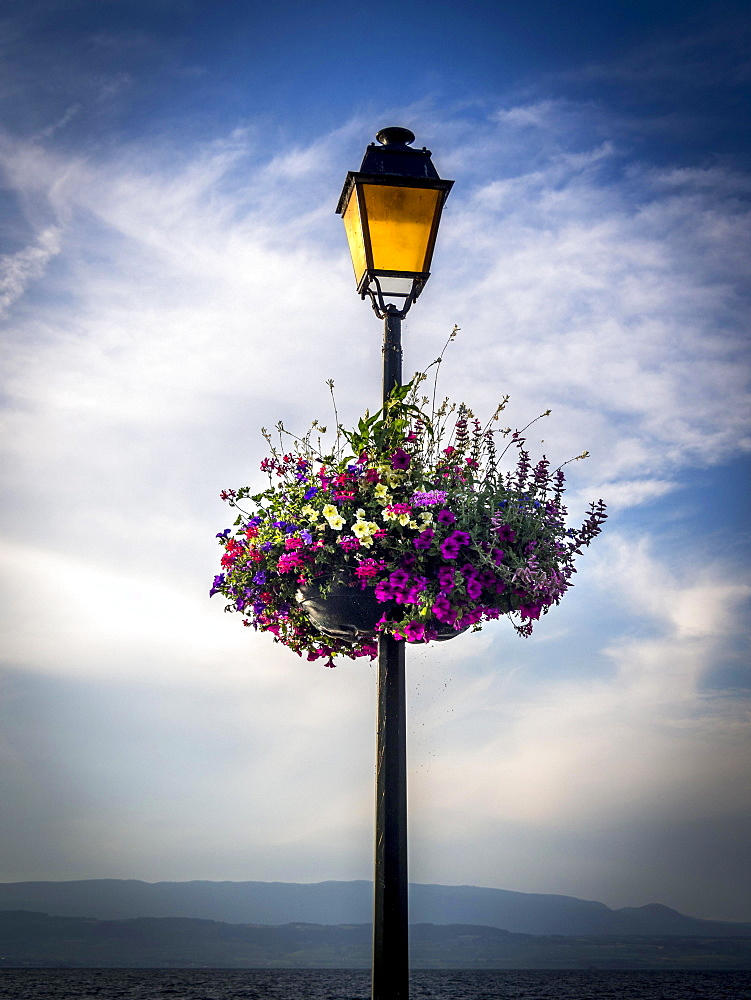 Decorative basket of flowers hanging on a street lamp, France, Europe