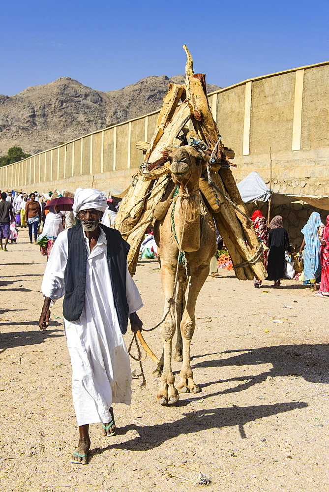 Man with his with his camel loaded with firewood walking through the Monday market of Keren, Eritrea, Africa