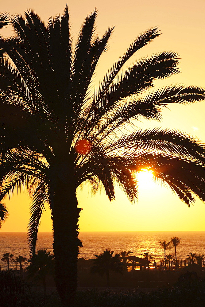 Palm trees by the sea at sunset, Playa de los Amadores, Gran Canaria, Canary Islands, Spain, Europe - 832-382927