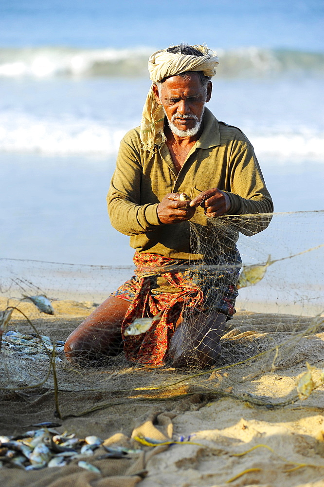 Fisherman taking small fish out of the net, on the beach, Arabian Sea, Varkala, Kerala, South India, India, Asia