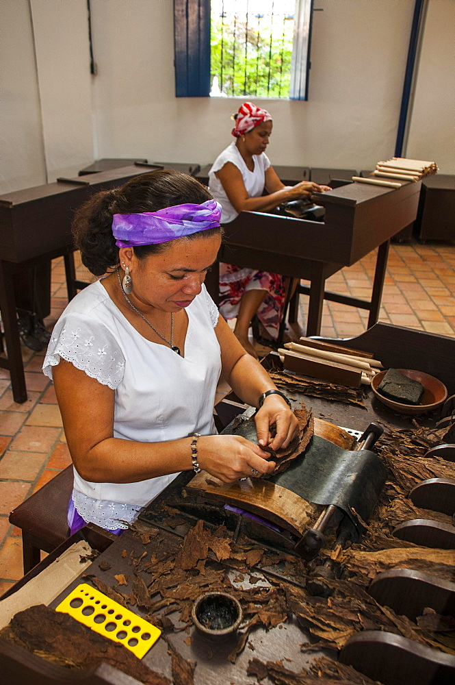 Women rolling cigars in the Dannemann cigar company, Cachoeira, Bahia, Brazil, South America