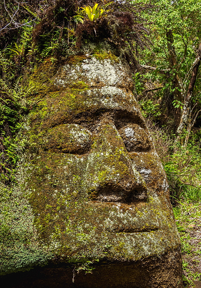 Face Sculpture in Tuff Rock, Asilo de la Paz, Highlands of Floreana or Charles Island, Galapagos, Ecuador, South America