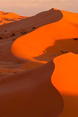 The sand dunes of Erg Chebbi in evening light, at the western edge of the Sahara desert, Meknes-Tafilalet, Morocco, Africa