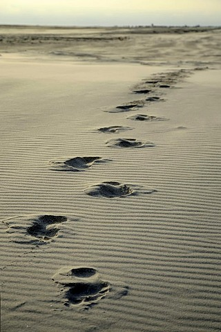 Footprints in the sand, Kniepsand beach, Amrum Island, Nordfriesland, North Frisia, Schleswig-Holstein, Germany, Europe