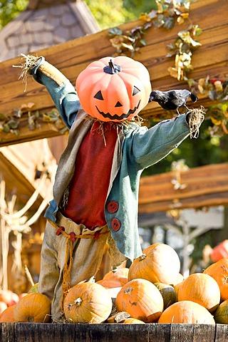Halloween scarecrow in Tivoli, Copenhagen, Denmark, Europe - 832-45187
