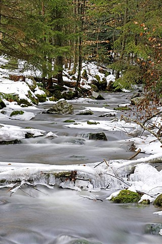 Flowing Kleine Ohe mountain brook with snow and ice, Nationalpark Bayrischer Wald national park, Bavaria, Germany, Europe