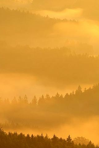Fog over Nassen Grund, Elbe Sandstone Mountains, Saxony, Germany, Europe