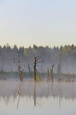 Schwenninger Moos Nature Reserve, source of the Neckar river, Villingen-Schwenningen, Black Forest, Baden-Wuerttemberg, Germany, Europe