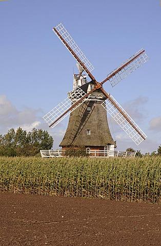 Windmill on Foehr island, North Frisian Islands, Schleswig-Holstein, Germany, Europe