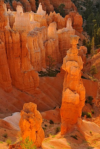 Rock formation, Thor's Hammer, morning light, Sunset Point, Bryce Canyon National Park, Utah, United States of America, USA