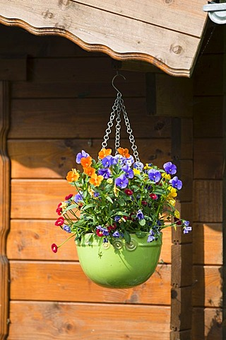 Flowerpot hanging from garden shed, Upper Bavaria, Germany, Europe