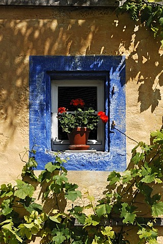 Window with geraniums and blue border on the Haeckergut farm from the Steigerwaldrand, built in 1717, from Ergersheim, Franconian open-air museum, Eisweiherweg 1, Bad Windsheim, Middle Franconia, Bavaria, Germany, Europe