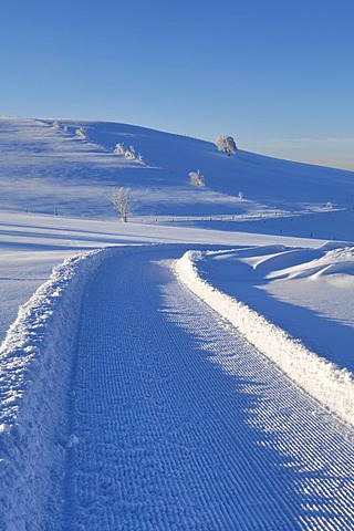 Cross-country ski run on Schauinsland Mountain, Black Forest, Baden-Wuerttemberg, Germany, Europe