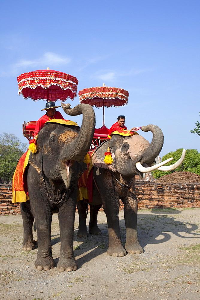Elephants, Ayutthaya Historical Park, Ayutthaya, Thailand, Southeast  Asia, Asia