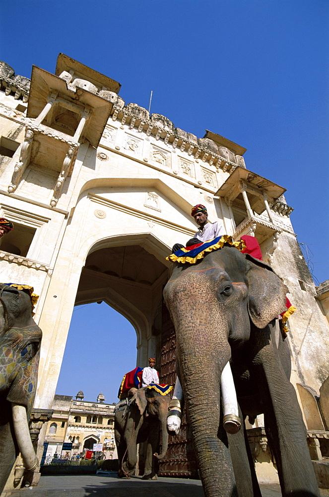 Decorated elephants walking through gateway, Amber Fort, Jaipur, Rajasthan, India, Asia