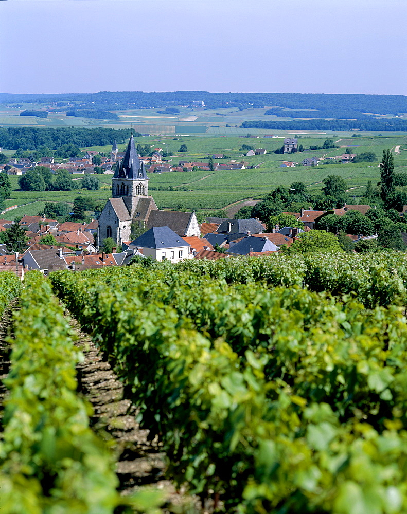 Vineyards near Reims, Champagne, France, Europe