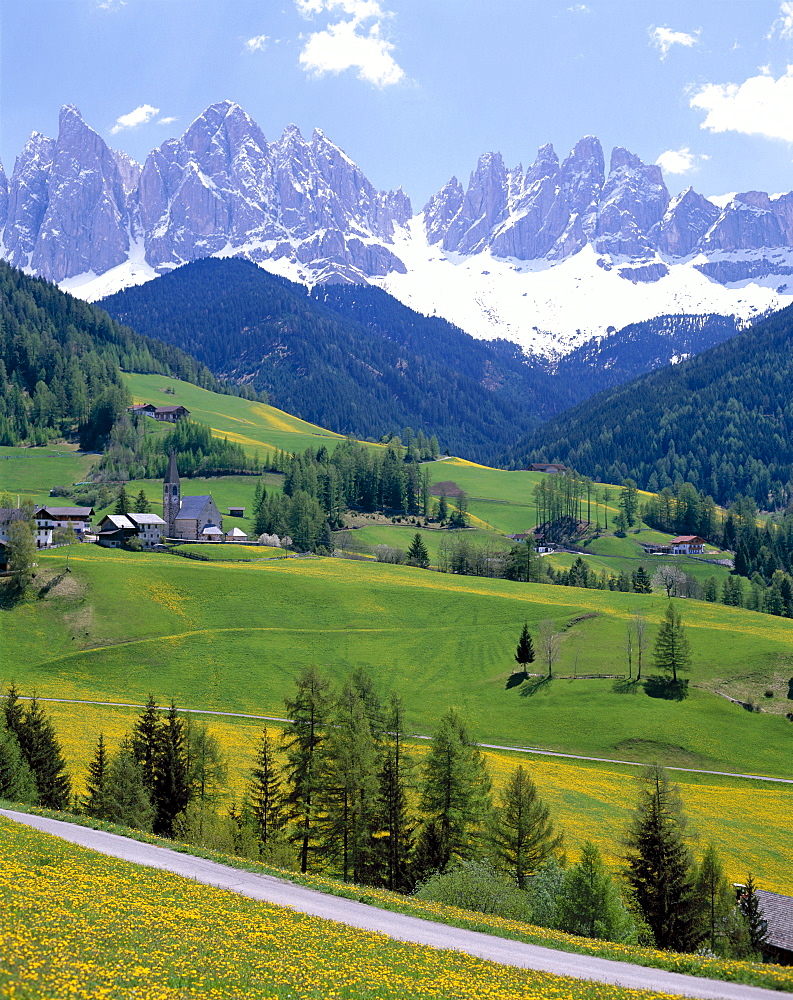 Wild flowers and road with St. Magalena church, Dolomites Mountains (Dolomiti), Villnoss, Val di Funes, Trentino, Italy