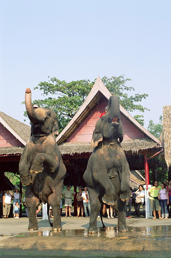 Elephant Show at The Rose Garden, Bangkok, Thailand, Southeast Asia, Asia