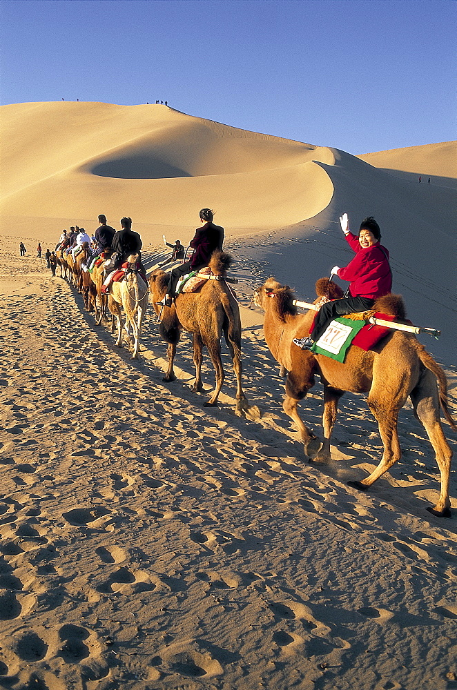 Tourists riding camels at Mount Mingshan, Dunhuang, Gansu Province, China, Asia