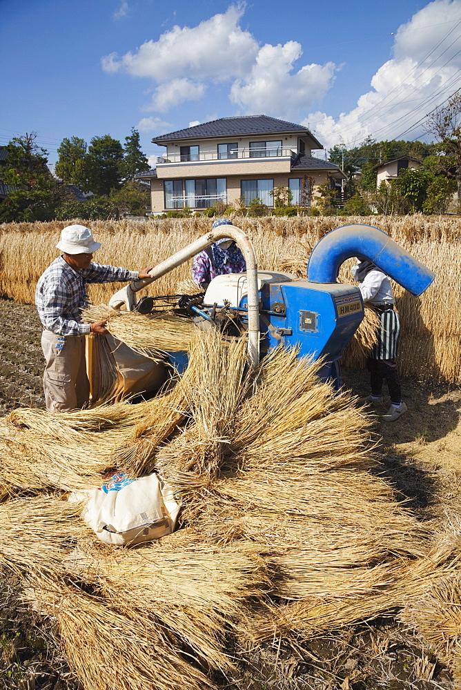 Rice threshing, Nagano Prefecture, Japan, Asia