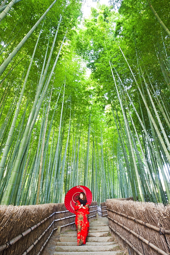 Bamboo forest, Adashino Nembutsu-ji Temple, Arashiyama, Kyoto, Japan, Asia - 834-6546