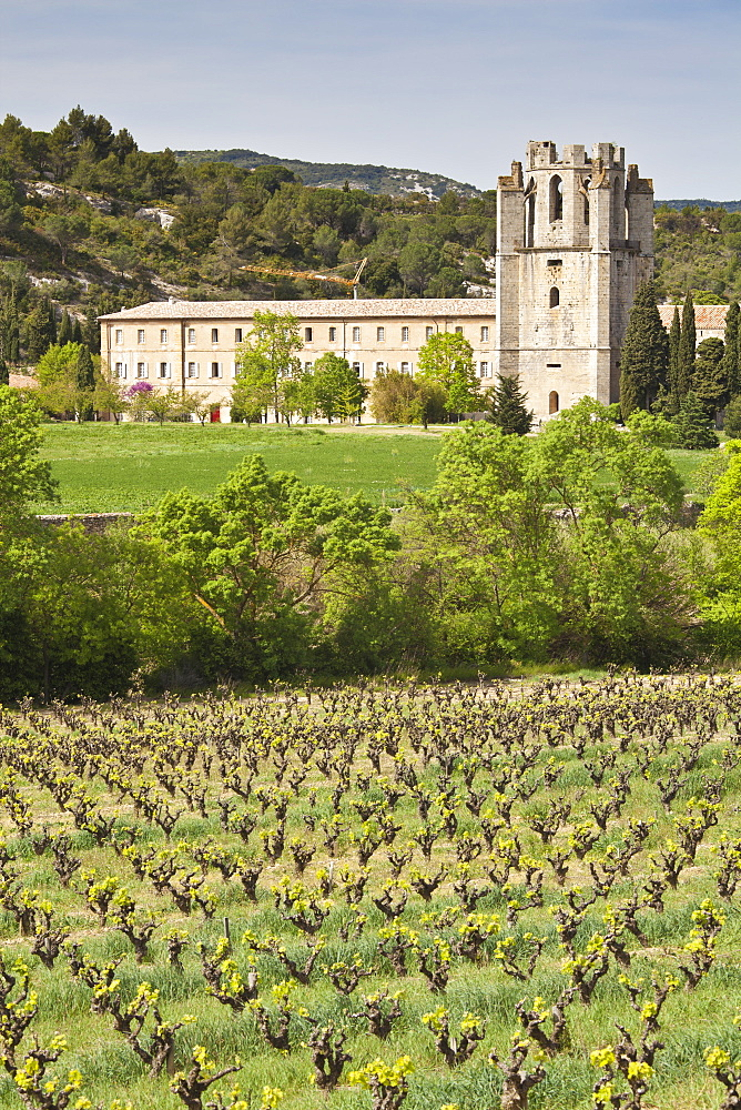 View of the Abbey of Sainte-Marie d'Orbieu, Lagrasse, across vineyards in Languedoc-Roussillon, France, Europe - 835-48