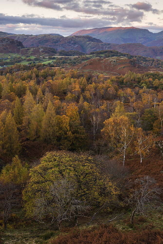 The view at twilight from Holme Fell, Lake District National Park, Cumbria, England, United Kingdom, Europe - 842-561