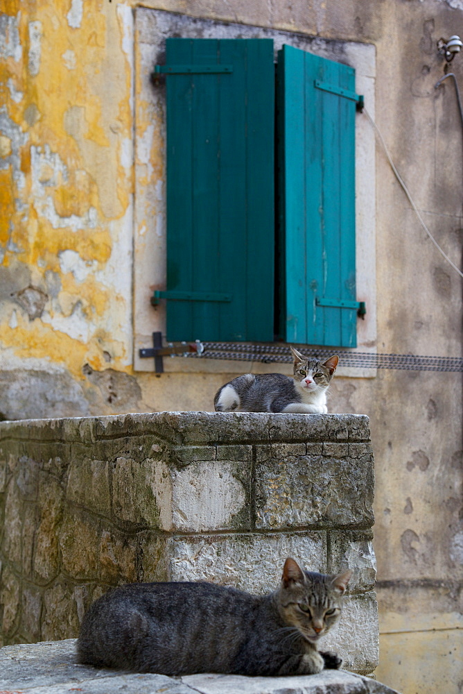 Cats in the Old Town, Kotor, Montenegro, Europe - 844-1380