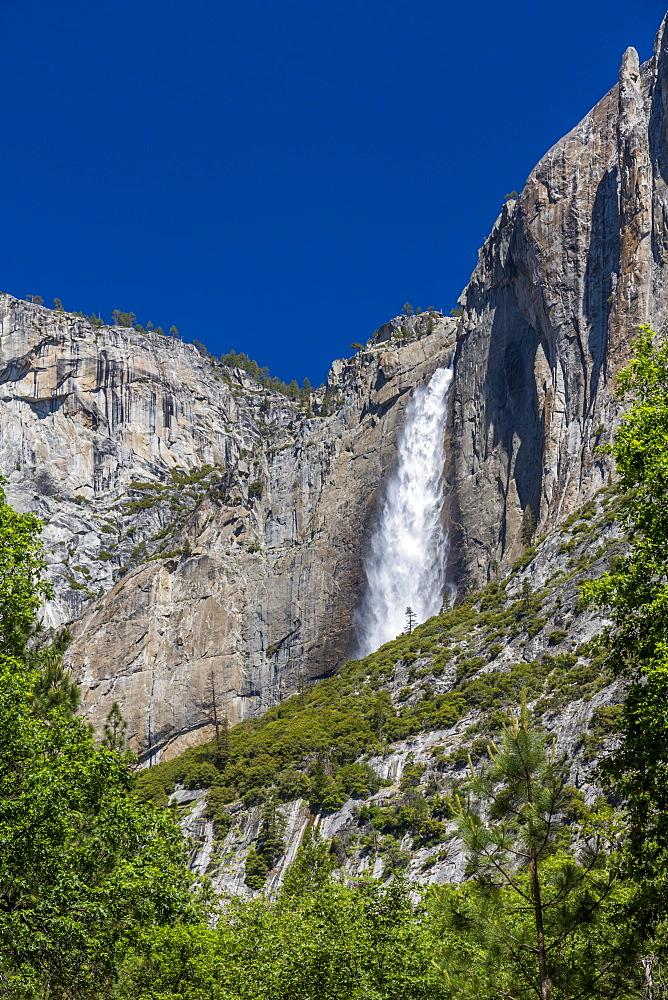 View of Yosemite Falls from Yosemite Village, Yosemite National Park, UNESCO World Heritage Site, California, USA, North America - 844-17037