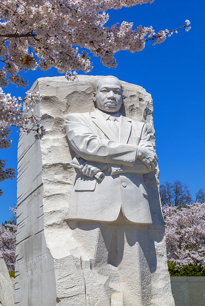 View of the Martin Luther King Jr. Memorial and cherry blossom trees in spring, Washington D.C., United States of America, North America