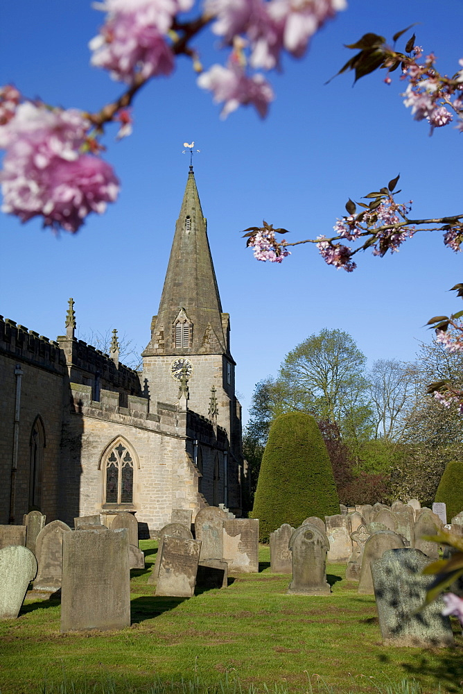 Baslow Parish Church and spring cherry blossom, Derbyshire, England, United Kingdom, Europe