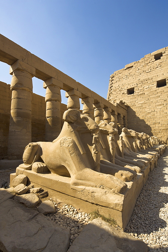 Ram headed sphinxes beyond the first pylon at Karnak Temple, Karnak, Thebes, UNESCO World Heritage Site, Egypt, North Africa, Africa