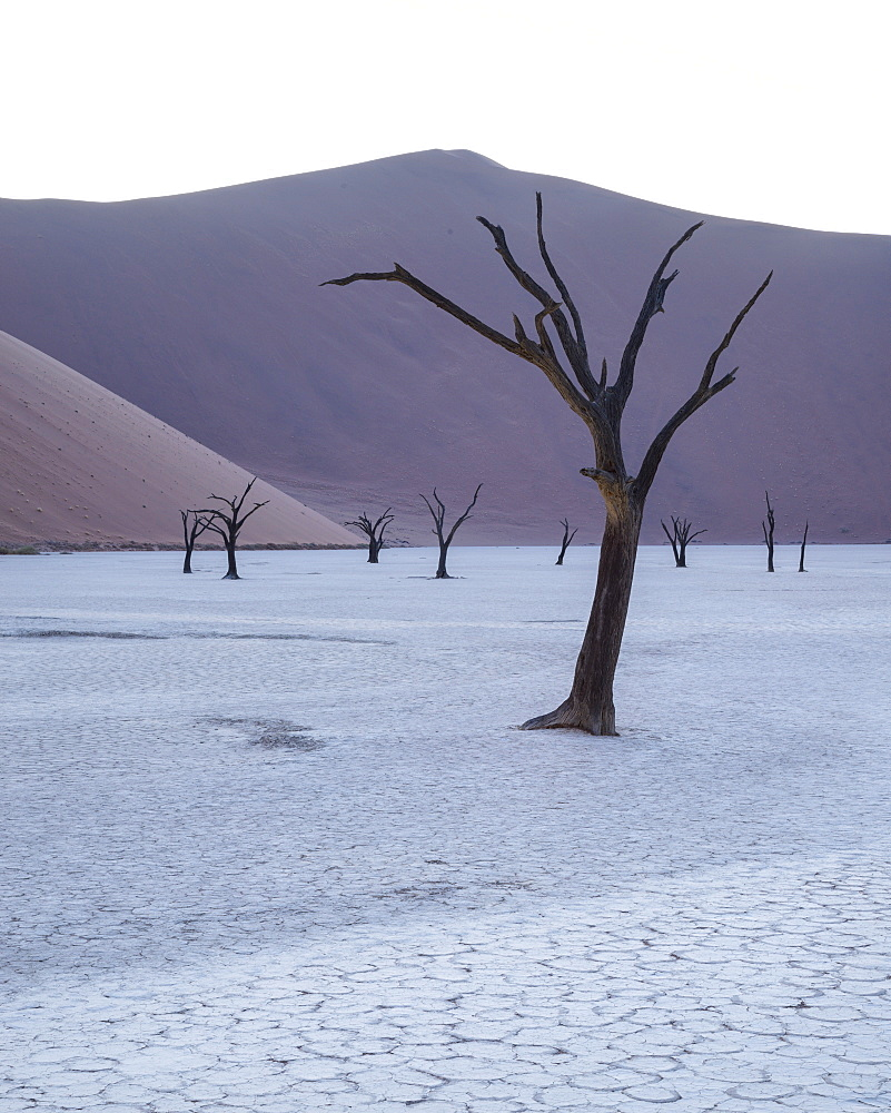 First light in the pan at Deadvlei, Namib Naukluft, Namibia, Africa