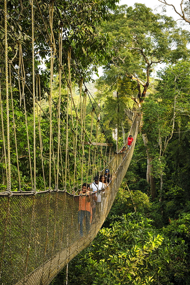 People on Canopy Walkway through tropical rainforest in Kakum National Park, Ghana, Africa