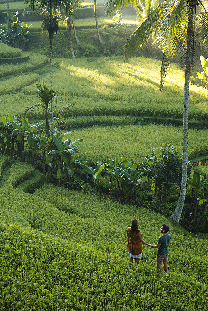 Tegalalang Rice Terraces near Ubud, Bali, Indonesia, Southeast Asia, Asia