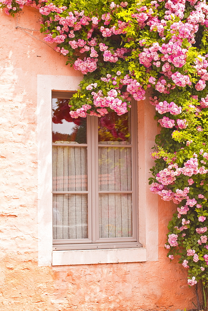 A rose covered window in the village of Noyers sur Serein in Yonne, Burgundy, France, Europe