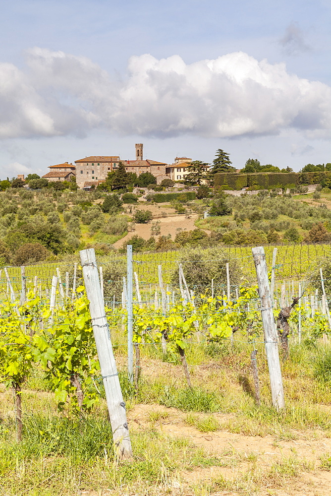 Vineyards near to Villa a Sesta, Chianti, Tuscany, Italy, Europe