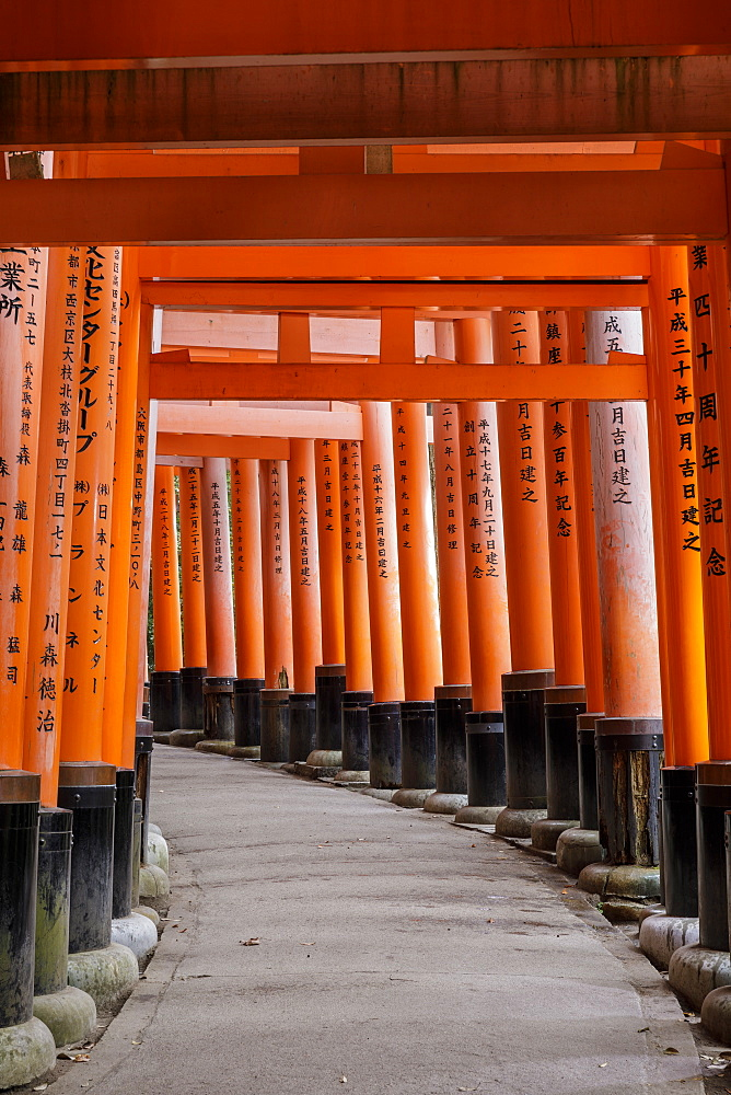 Vermilion torii gates at the Fushimi Inari Shrine in Kyoto, Japan.