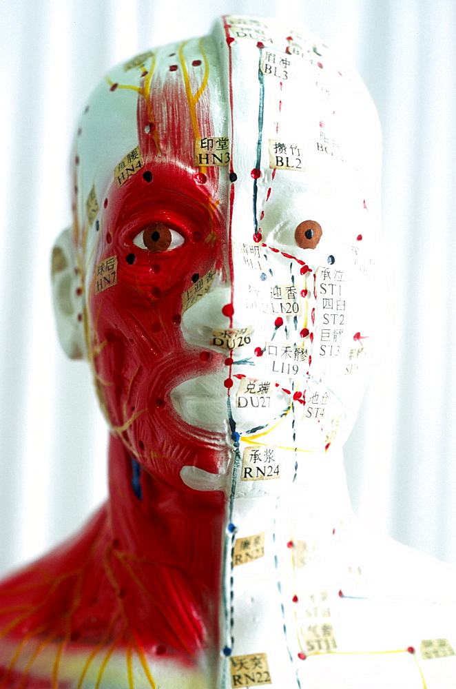 chinese medicine. a model of a human head with the meridians and acupuncture points which is used as a learning tool for students of acupuncture.