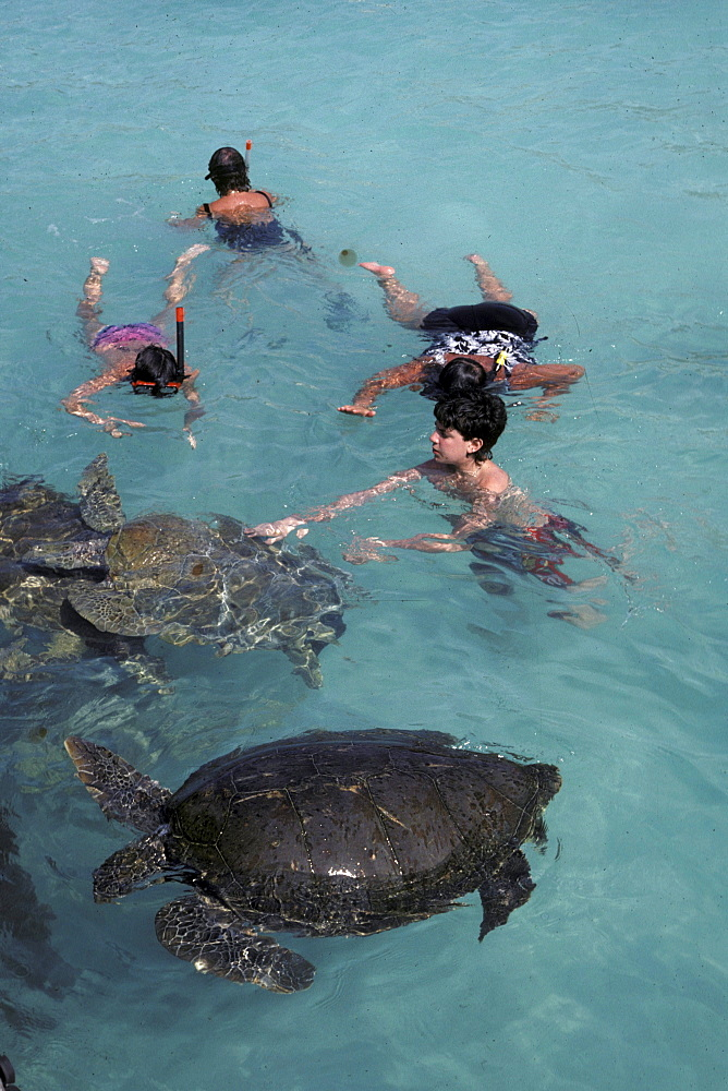 Tourists swim with sea turtles, Isla Mujeras, an island just off of Cancun, Yucatan Peninsula, Mexico