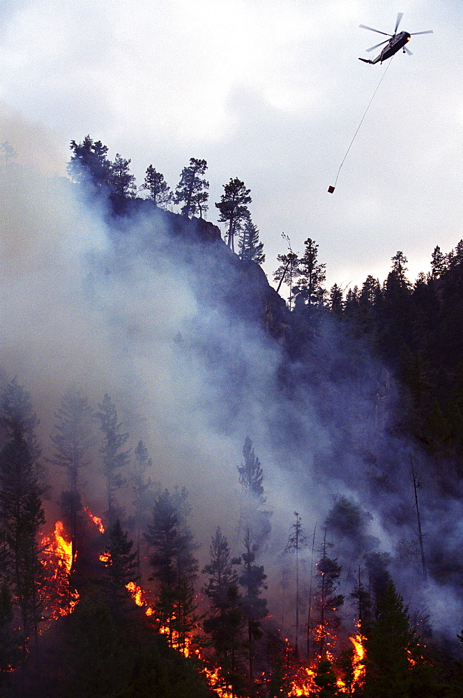 A helicopter drops water on the Bitterroot forest fire as it burns out of control in the Bitterroot National Forest near Hamilton, Montana.