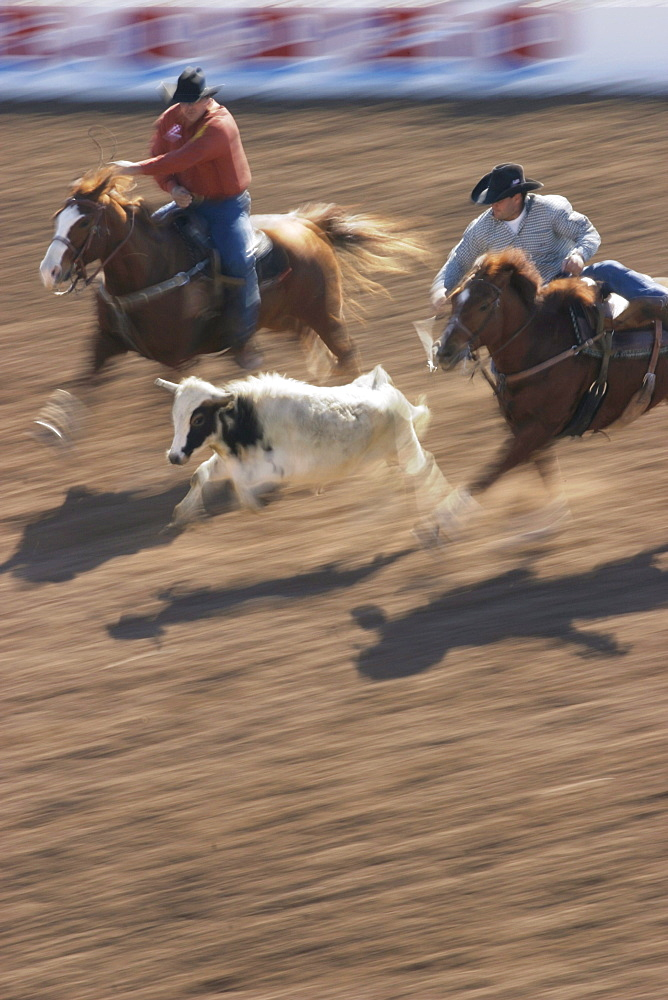 professional rodeo cowboys steer wrestling