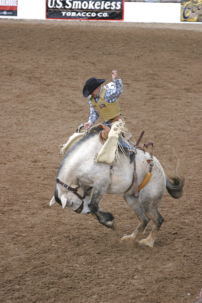 professional rodeo cowboys bare back bronco riding.