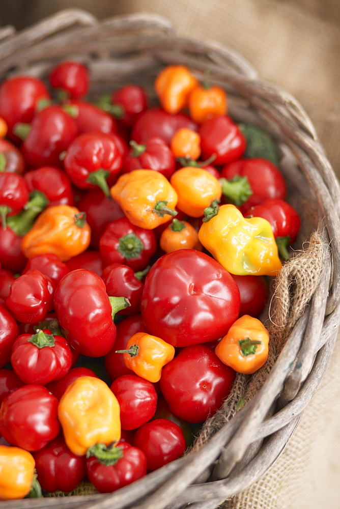 A basket of red and yellow hot peppers at a farm stand in Madison, Connecticut.