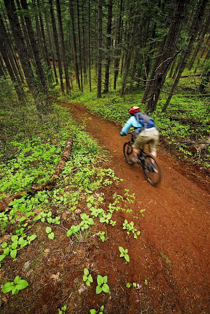 Woman mountain biking. Hood River, Oregon, USA