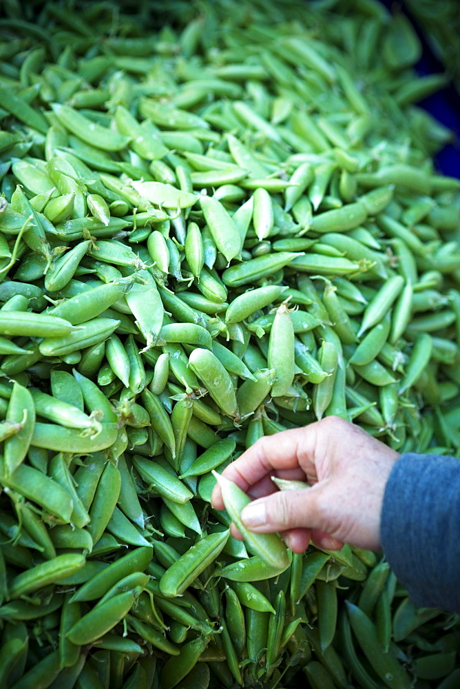 A stack of fresh green beans at a Farmer's Market in San Francisco, California.