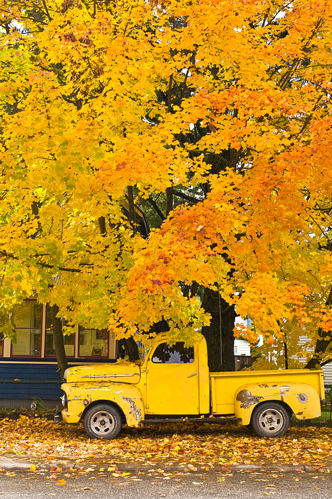 Revelstoke, B.C. - October 21: An old, weathered yellow truck is parked on a residential street under an old, colorful maple tree on October 21, 2008 in Revelstoke, British Columbia, Canada. Revelstoke is a small mountain town, which in recent years has seen substantial growth as ski destination with the opening of new ski hill that has the largest vertical drop in North America along with an abundance of snow. (Photo By Dan Rafla/Aurora), Canada