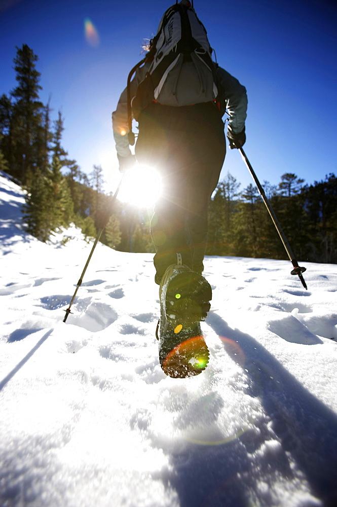Trish Gumina snow hiking along the Bristlecone Trail, Nevada, United States of America